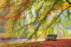 Autumn bench. Beautiful autumn view of a bench under a bright colored autumn tree in het Amsterdamse bos (Amsterdam wood) in the Netherlands. HDR Royalty Free Stock Image