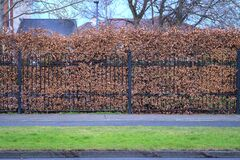 Autumn view of hedge with brown autumn leaves on metal fence along cycling path and sidewalk, Dublin, Ireland