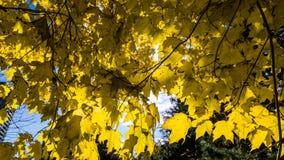 Hokkaido University at Autumn Season. Royalty Free Stock Photo
