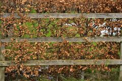 Autumn view of wooden fence and hedge with brown autumn leaves along road to Ticknock Forest National Park, Co. Dublin
