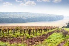 Beautiful autumn vineyard landscape Royalty Free Stock Photos