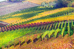 Beautiful autumn vineyards of Piemonte - famous vine region of I Royalty Free Stock Photography