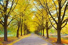 Beautiful autumn walkway Stock Image