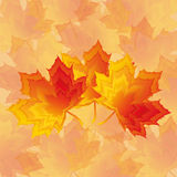 Beautiful Autumn Wallpaper With Red - Yellow Maple Stock Photos