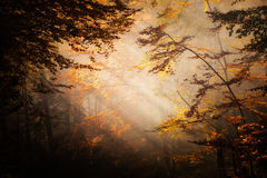 Beautiful autumn woods landscape Stock Images