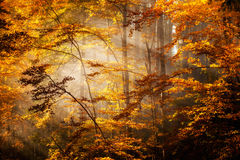 Beautiful autumn woods landscape Royalty Free Stock Photography