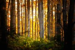 Beautiful autumn woods landscape Stock Photo