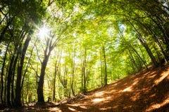 Beautiful autumn woods landscape Royalty Free Stock Photo