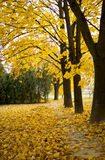 Beautiful autumn with yellow leaves. In Europe stock photography