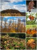 Beautiful autumn yellow orange collage images Royalty Free Stock Photography