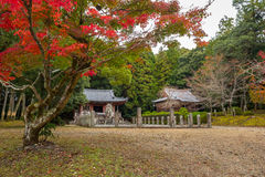 Beautiful autumnal alley in the park of Kyoto Stock Images