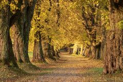 Beautiful autumnal avenue in the south of Germany near Mindelheim stock photography
