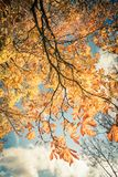 Beautiful, autumnal background. With canopy of leaves and branches stock photography