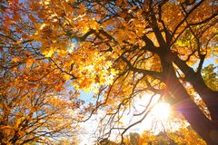 Beautiful, autumnal background with canopy of leaves and branches. With beams of light stock photography