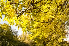 Beautiful, autumnal background with canopy of leaves and branches. In the sunshine stock photo