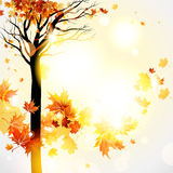 Beautiful autumnal background with tree Stock Image