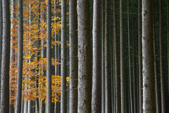 Beautiful autumnal forest Stock Photo