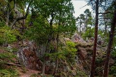Beautiful autumnal forest details, natural landscape Stock Photo