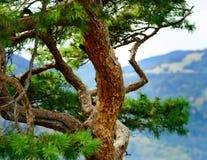Beautiful autumnal forest details, natural landscape Stock Photos