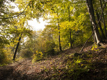Beautiful autumnal forest Royalty Free Stock Photos