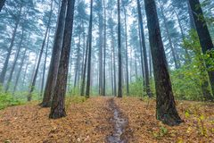Beautiful autumnal forest landscape Stock Photography