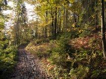 Beautiful autumnal forest Stock Photos