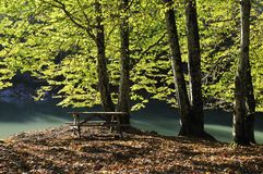 Beautiful autumnal lake Royalty Free Stock Photo