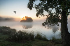 Beautiful Autumnal landscape image of birds flying over misty la Stock Photo