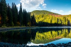 Misty morning on the forest lake in mountains Stock Images