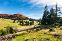 Beautiful autumnal landscape in mountains. Spruce trees on the hill. small pond in the distance. wonderful warm weather royalty free stock photography