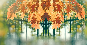 Beautiful autumnal leaves in park - oak leaves Royalty Free Stock Photos