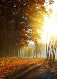 Beautiful Autumnal park. Royalty Free Stock Photo
