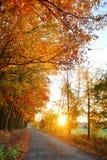 Beautiful Autumnal park. Royalty Free Stock Photos