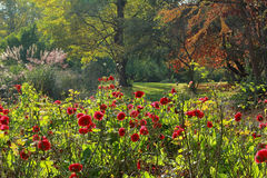 Beautiful autumnal park with red roses Royalty Free Stock Images