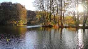Beautiful  autumnal park and river. Full HD stock footage