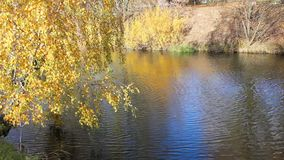 Beautiful  autumnal park and river stock video footage
