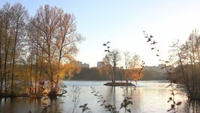 Beautiful  autumnal park and river stock footage