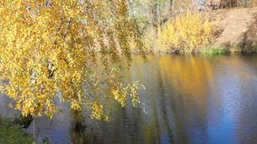 Beautiful  autumnal park and river. Full HD. Belarus, Minsk stock video