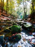 Beautiful autumnal photography of mountains stream in forest Royalty Free Stock Images