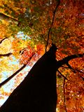Beautiful autumnal photography of sunny beech forest Stock Photo