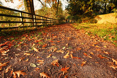 Beautiful autumnal road Royalty Free Stock Photography