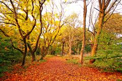 Beautiful autumnal road in the park Stock Photography