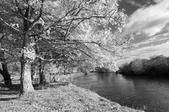 Beautiful Autumn in the Park, Scotland. Beautiful autumnal scene in black and white stock photos