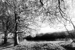 Beautiful autumnal scene in black and white. Beautiful autumnal scene at the river in black and white stock photos