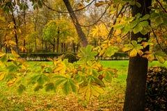 Beautiful autumnal scene in El Retiro in Madrid royalty free stock photos