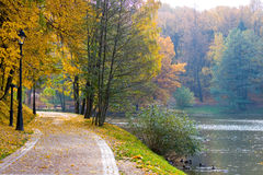 Beautiful avenue in autumn park. Stock Photography