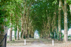 Beautiful avenue with old trees Loire valley France. Royalty Free Stock Photography