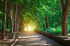 Beautiful avenue in to the park Stock Image