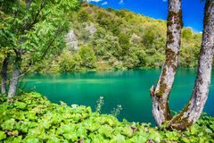 Azure lake in Plitvice Royalty Free Stock Image