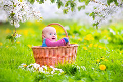 Beautiful baby in a basket in a blooming apple tree Royalty Free Stock Photo